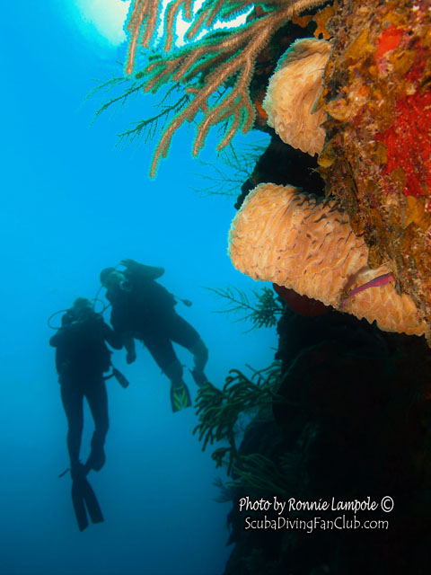 Diving_Guardalavaca