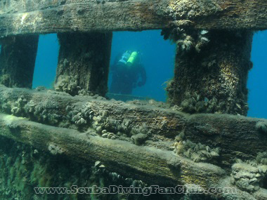 diving in Tobermory