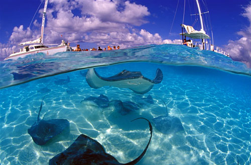 Stingrays in Caymans Islands
